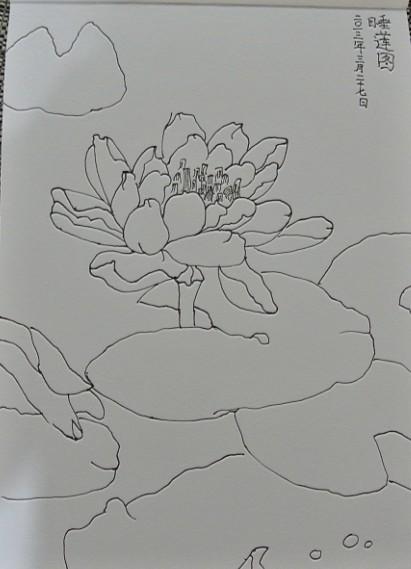 睡莲简笔画图片大全内容图片展示